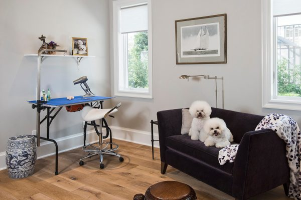 Dog Grooming Room
